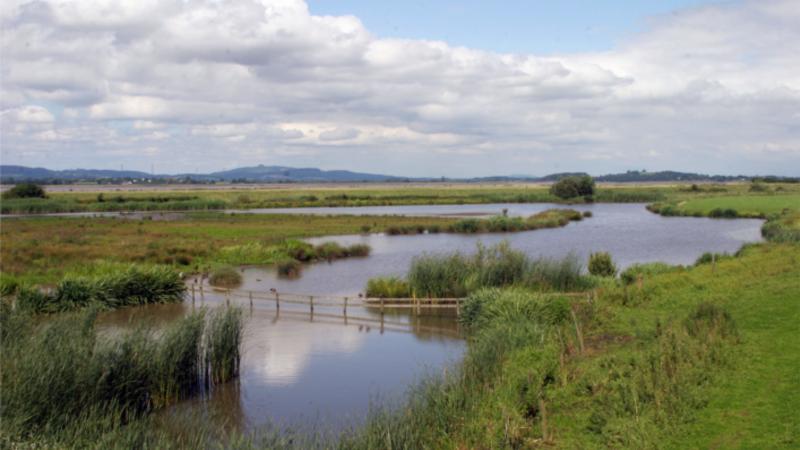 Medium crop slimbridge wetland centre